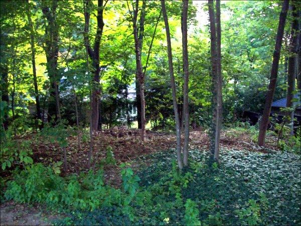 Woodlot surface has small ridges and mounds covered by natural stick and leaf mulch